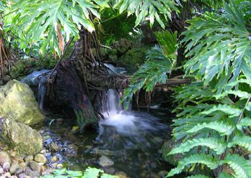 fairchild-tropical-botanic-garden